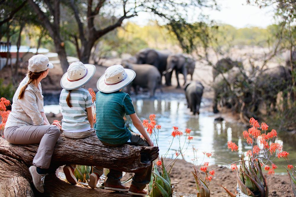 Tre ting du skal huske på safarirejsen