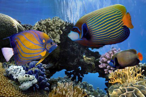 Indholdsrige dykker rejser Kap Verde