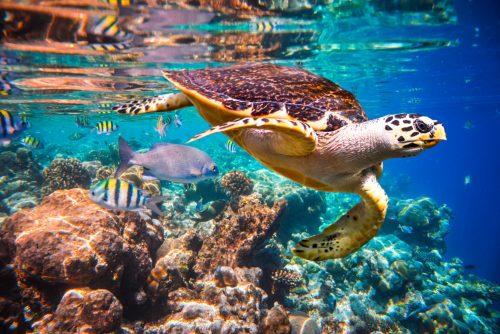 Maldiverne – Oplev det fantastiske marineliv
