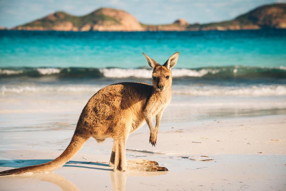 Kør-selv-ferie og roadtrip i Australien