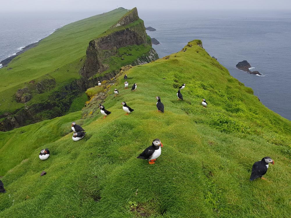 Færøerne: Disse ting skal du opleve