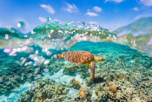 3 seværdigheder du skal opleve på den australske østkyst