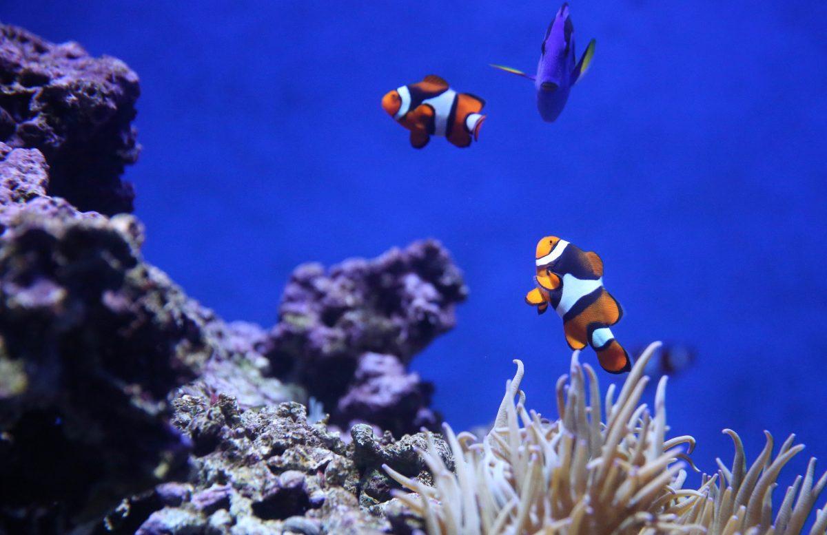Guide Australien: Oplevelser i Cairns