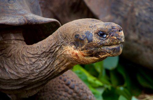 Derfor skal du rejse til Galapagos