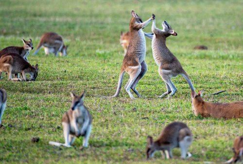 Guide: Derfor skal du køre rundt i Australien